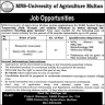 Job In MNS-University of Agriculture Multan Jobs 05 October 2019